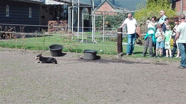 Boerenfestival (24).jpg