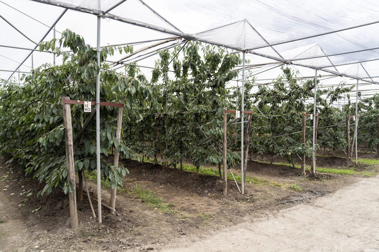 Glastuinbouw.jpg