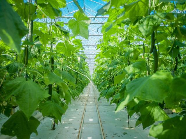 Glastuinbouw Noord Brabant